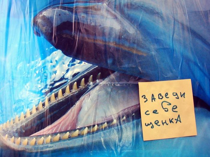 монолог с городом, бумажки с надписями, дельфинарий,  завести щенка