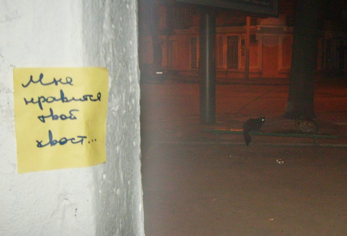 монолог с городом, бумажки с надписями, твой хвост, хвост кота
