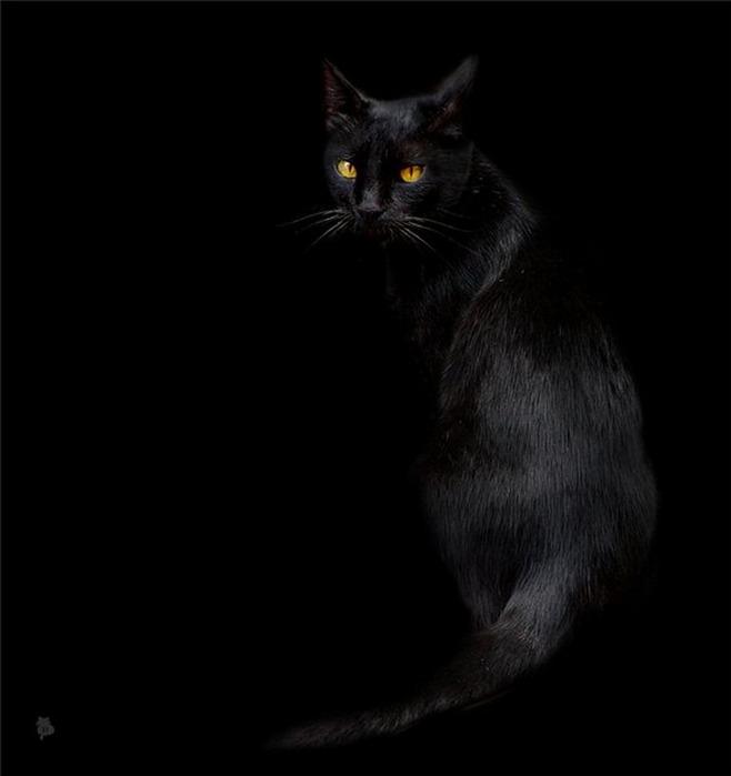А как вы относитесь к чёрным кошкам 4