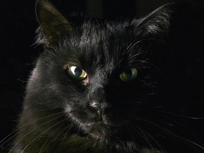 А как вы относитесь к чёрным кошкам 6