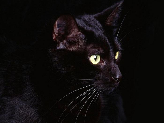 А как вы относитесь к чёрным кошкам 8