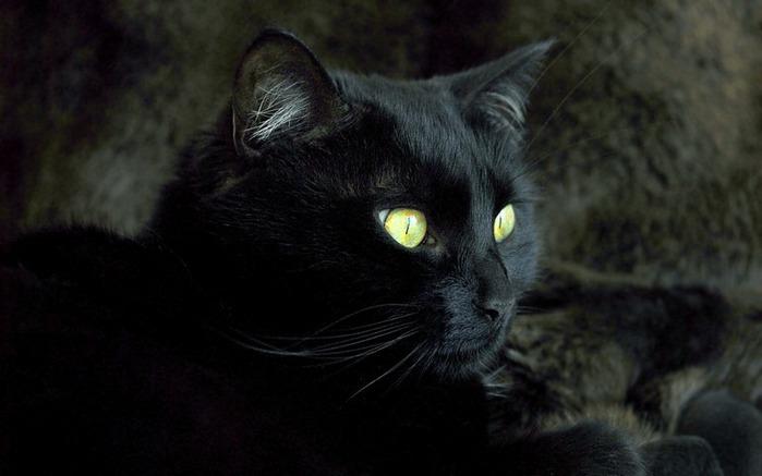 А как вы относитесь к чёрным кошкам 10
