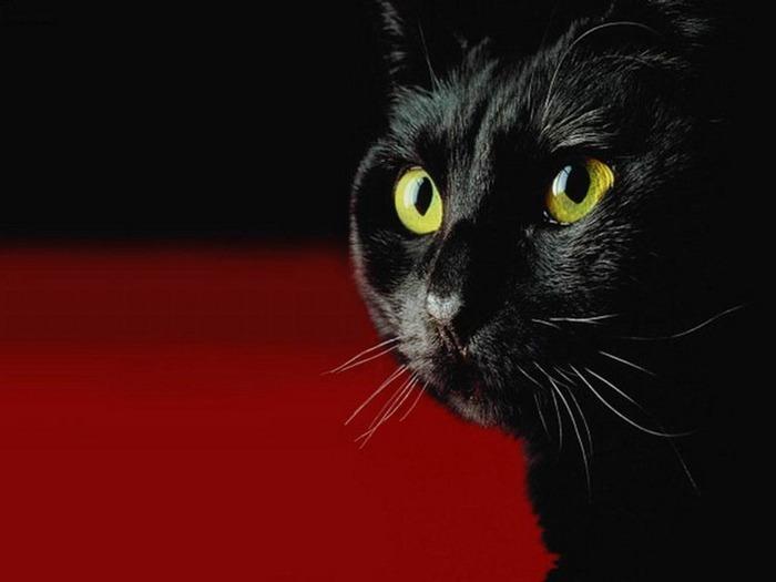 А как вы относитесь к чёрным кошкам 13