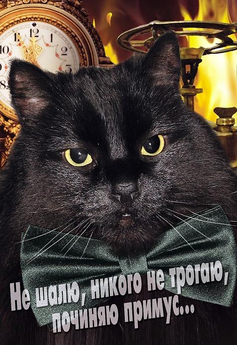 А как вы относитесь к чёрным кошкам 15