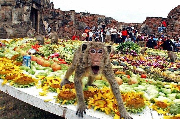 Обезьяний банкет - чем мы хуже обезьян!