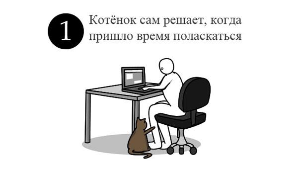cat_instruction_ (600x346, 21 Kb)