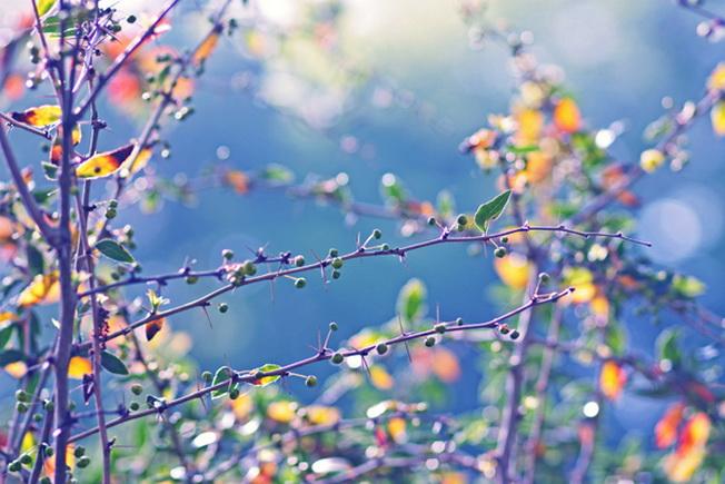 Сентиментальные цветы от Alicja Rodzik