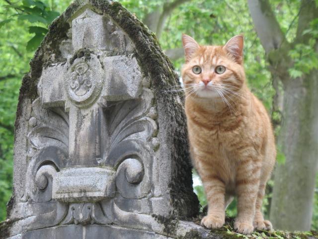 Кладбище Пер-Лашез 45915
