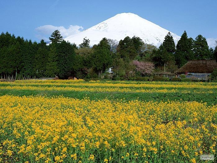 Величественный символ Японии - гора Фудзи 35