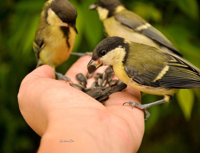 Птичек кормят