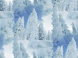 60816321_1277553390_winter10 яя (250x188, 21 Kb)