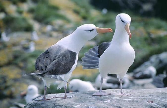 фолклендские острова туры