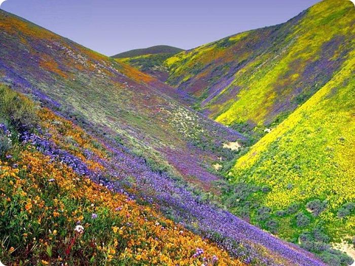 Долина цветов – жемчужина Гималаев 1