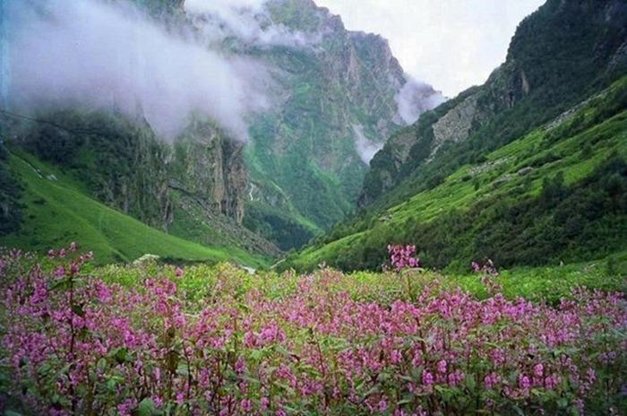 Долина цветов – жемчужина Гималаев 3