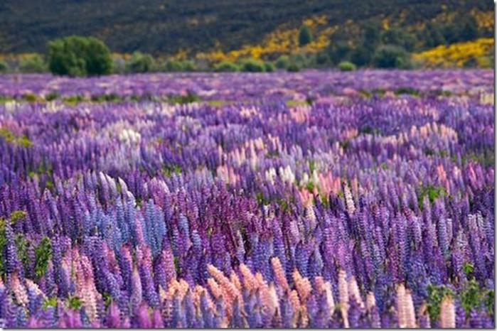 Долина цветов – жемчужина Гималаев 6