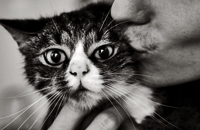 Пришла кошка.
