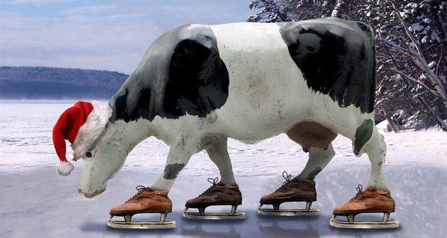 корова на льду
