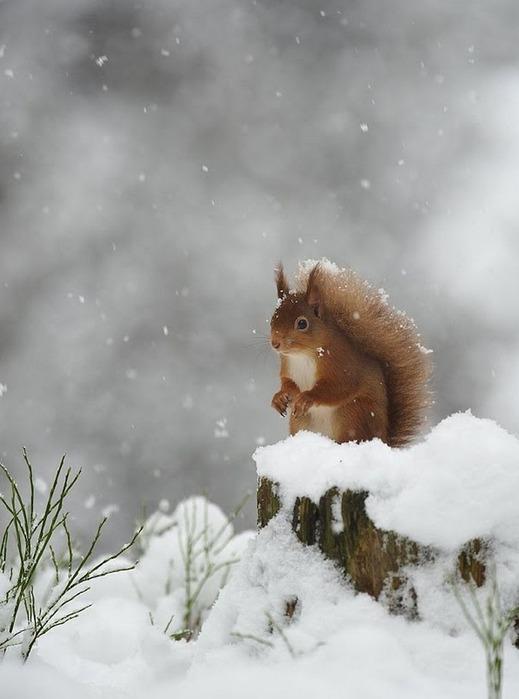 Вот и наступила зима 4