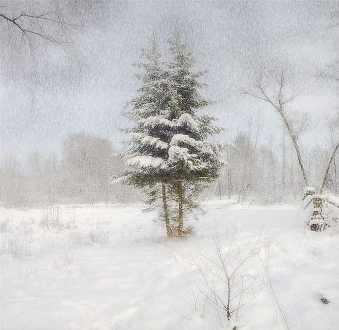Вот и наступила зима 36