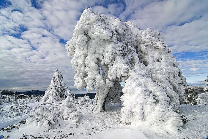 Вот и наступила зима 56