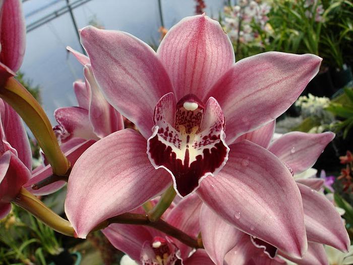 Орхидеи. Виды и сорта. (700x525, 112Kb)
