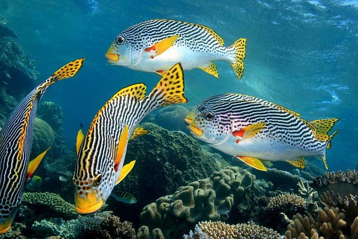 Восьмое чудо света - Большой Барьерный риф Австралии-Great Barrier Reef 43801