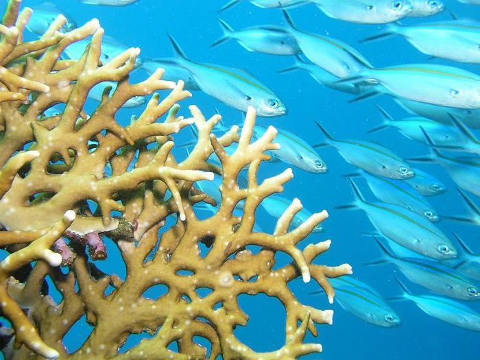 Восьмое чудо света - Большой Барьерный риф Австралии-Great Barrier Reef 97852