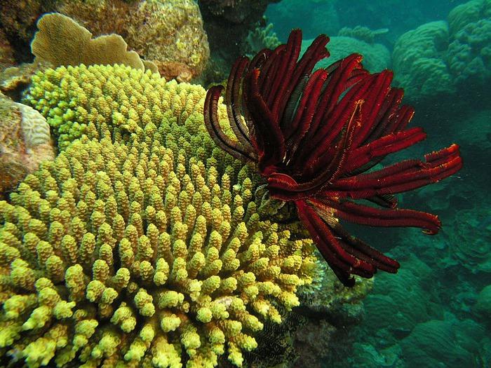 Восьмое чудо света - Большой Барьерный риф Австралии-Great Barrier Reef 42706