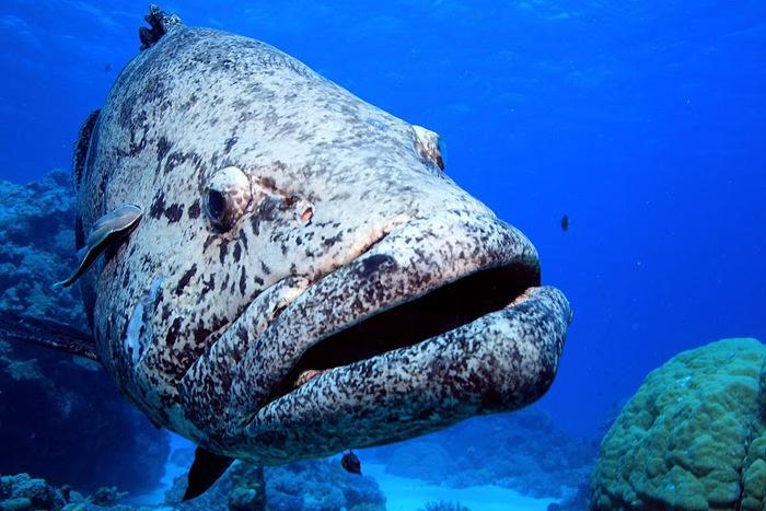 Восьмое чудо света - Большой Барьерный риф Австралии-Great Barrier Reef 53319