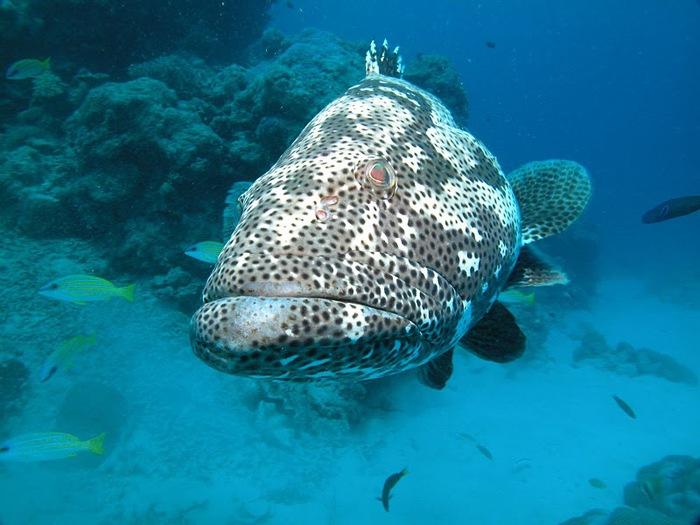 Восьмое чудо света - Большой Барьерный риф Австралии-Great Barrier Reef 94354