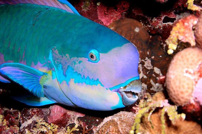 Восьмое чудо света - Большой Барьерный риф Австралии-Great Barrier Reef 39379