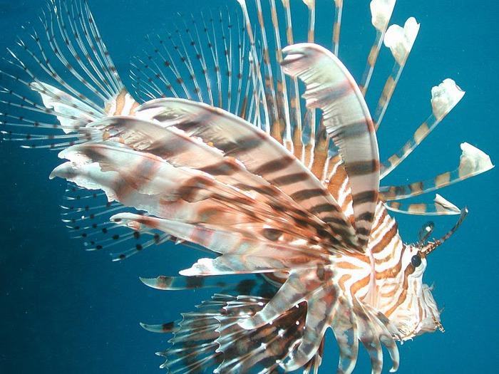 Восьмое чудо света - Большой Барьерный риф Австралии-Great Barrier Reef 23344
