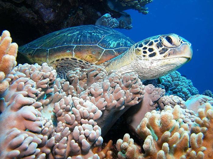 Восьмое чудо света - Большой Барьерный риф Австралии-Great Barrier Reef 76890
