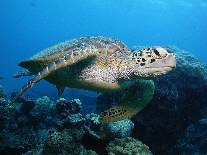 Восьмое чудо света - Большой Барьерный риф Австралии-Great Barrier Reef 85336