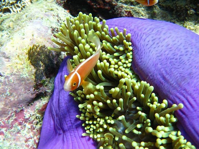 Восьмое чудо света - Большой Барьерный риф Австралии-Great Barrier Reef 40596