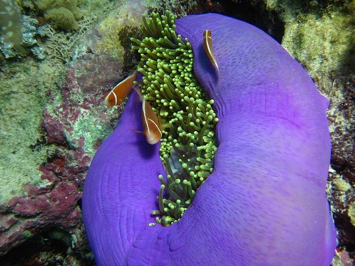 Восьмое чудо света - Большой Барьерный риф Австралии-Great Barrier Reef 12718