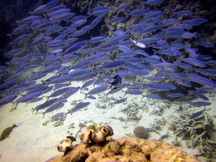 Восьмое чудо света - Большой Барьерный риф Австралии-Great Barrier Reef 58545