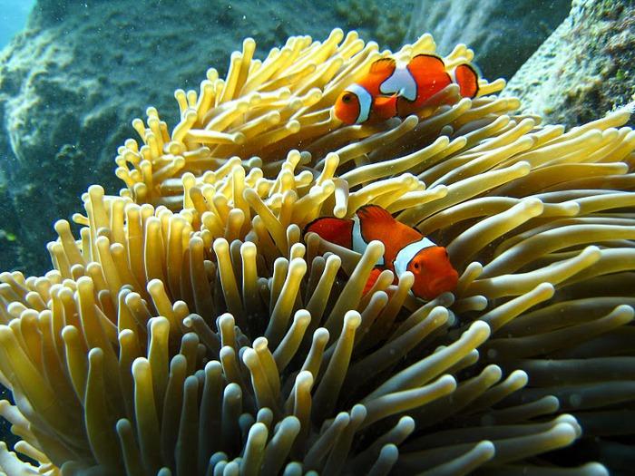 Восьмое чудо света - Большой Барьерный риф Австралии-Great Barrier Reef 45089