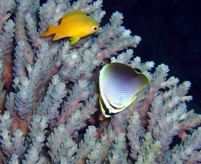Восьмое чудо света - Большой Барьерный риф Австралии-Great Barrier Reef 36624