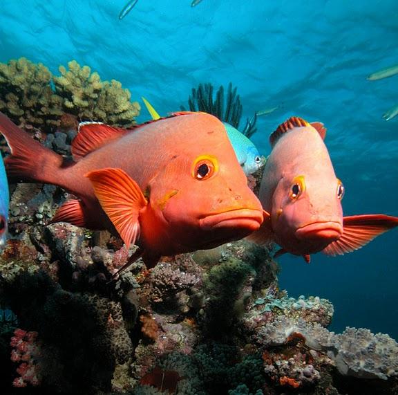 Восьмое чудо света - Большой Барьерный риф Австралии-Great Barrier Reef 25701