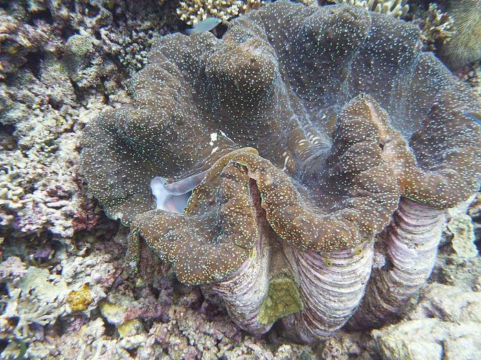 Восьмое чудо света - Большой Барьерный риф Австралии-Great Barrier Reef 81065