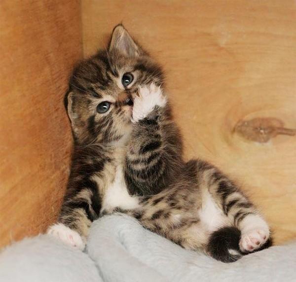 видео про кошек Пятница,...