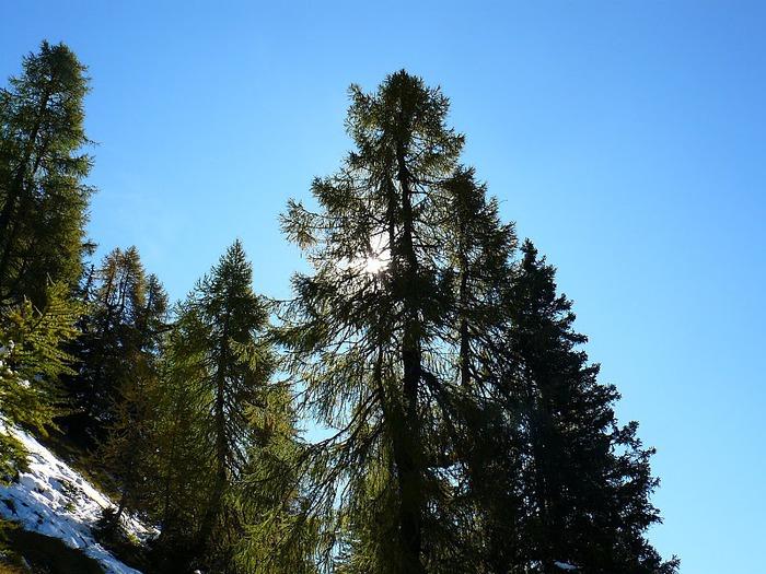 Доломити-ди-Брента 13674