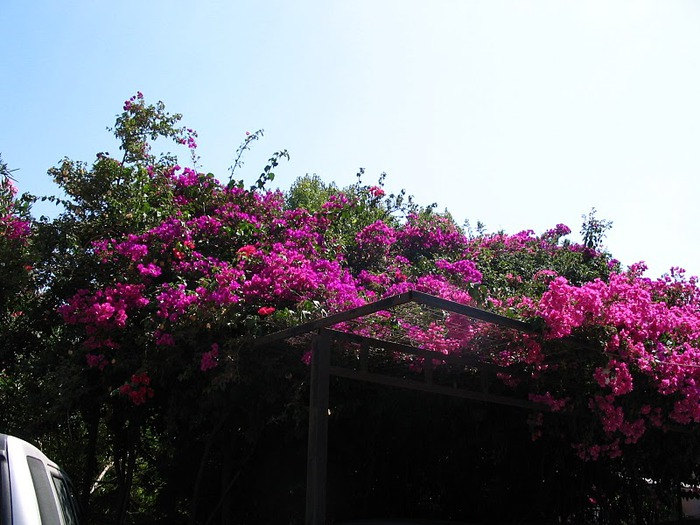 Корфу - «остров вечных возвращений». 87184