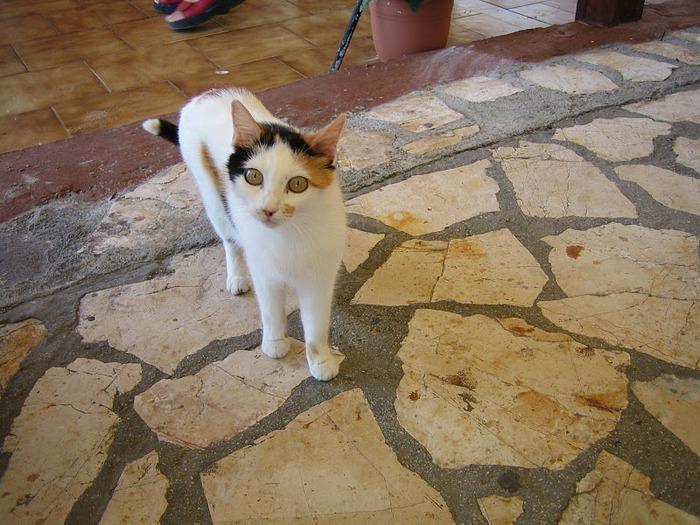 Корфу - «остров вечных возвращений». 51361