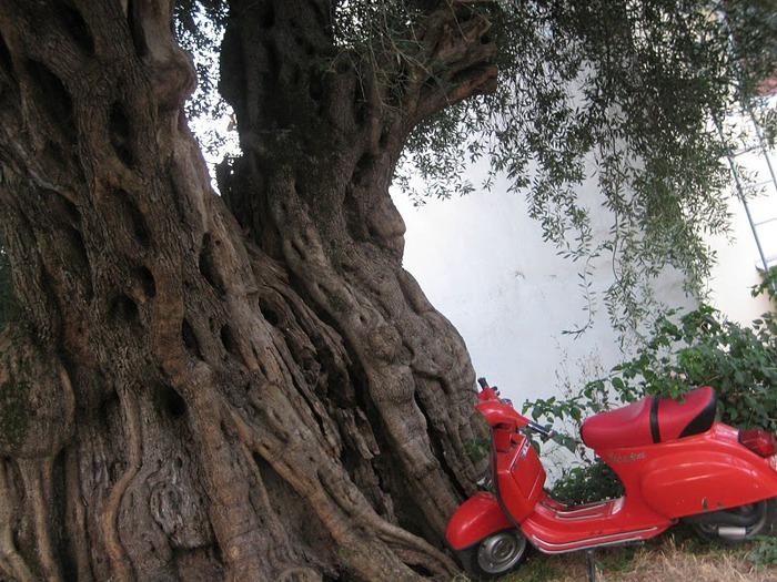 Корфу - «остров вечных возвращений». 78511