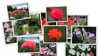 Цветы парка Багатель (часть 1)