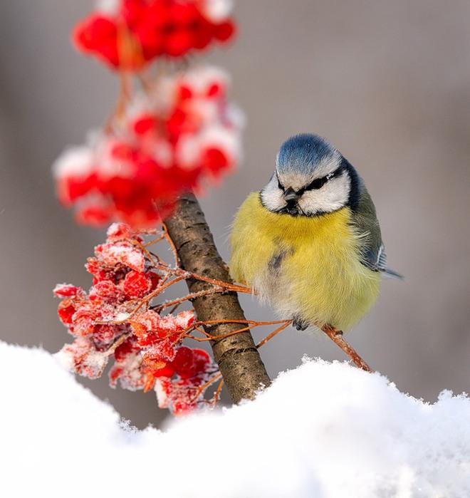 яркие пятна зимы