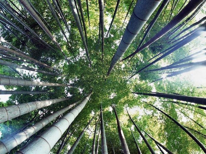 50 великолепных пейзажей Японии 16