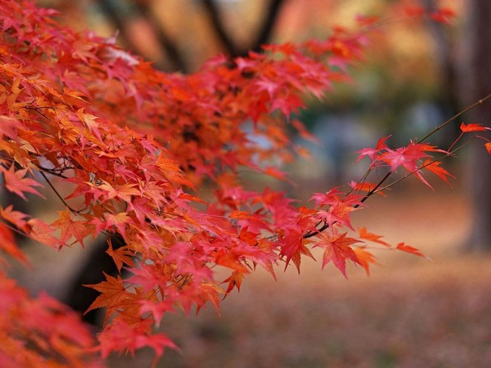 50 великолепных пейзажей Японии 25